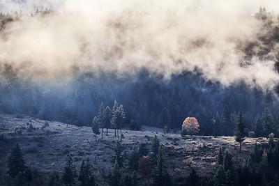 Backlit Oak