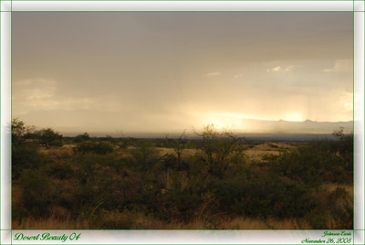 Desert Beauty 04  The Sonoran desert in south-east Arizona, as a storm is rolling in.  26 November 2008.