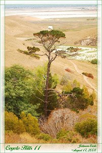 Coyote Hills 11  Tree growing tall out of a gully.  Coyote Hills Regional Park, Fremont, California, 17 August 2008