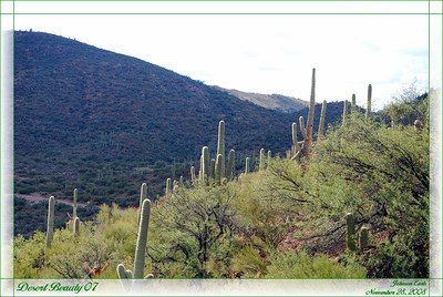Desert Beauty 07  A view of the desert from outside Colossal Cave State Park.  Tucson, Arizona, 28 November 2008.