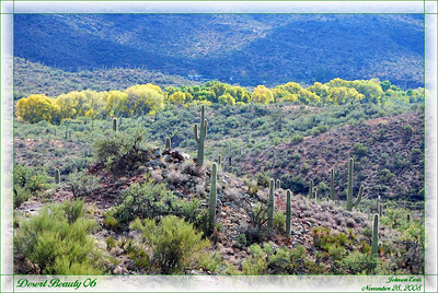 Desert Beauty 06  A view of the desert from outside Colossal Cave State Park.  Tucson, Arizona, 28 November 2008.
