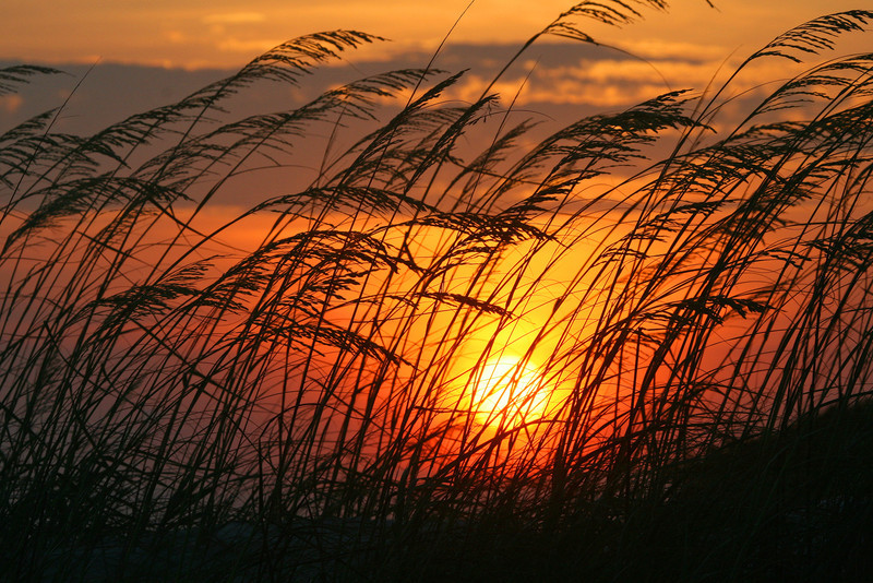 Sunset through the sea oats at Huntington Beach State Park, Murrells Inlet, SC #952