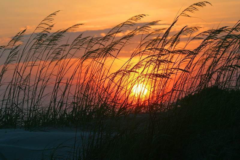 Sunset over the dunes, Huntington Beach state park. #954