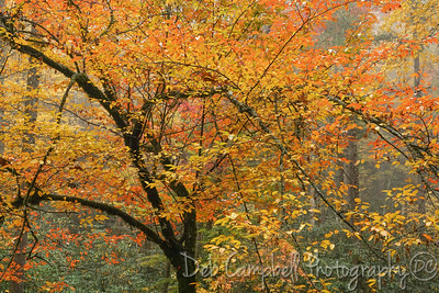 Color in the Trees