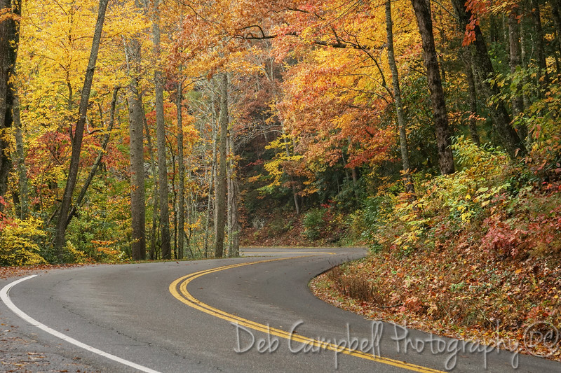 Autumn on Little River Road