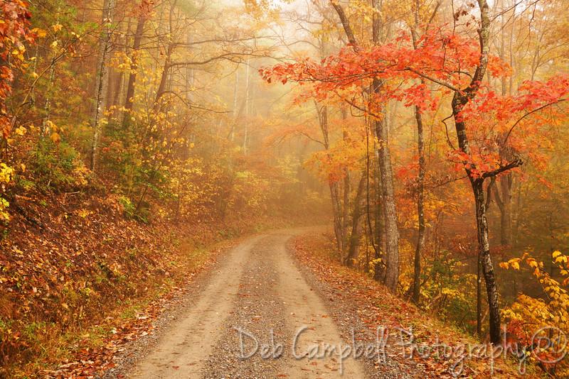 Rich Mountain Road Fall