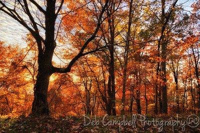 Woods of Color
