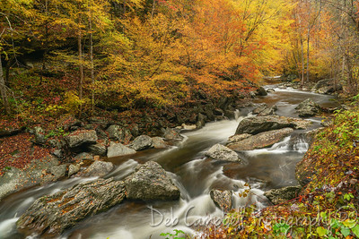 Color in the Gorge