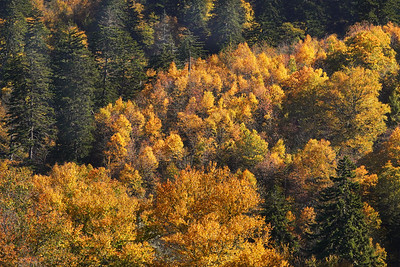 Fall Colors 2020