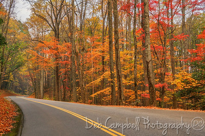 Autumn on Laurel Creek Road
