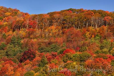 Mother Nature's Color Palette