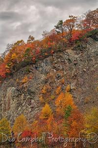 Fall/Autumn 2015