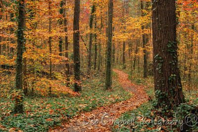 Maryville College Woods