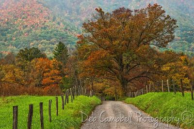 Autumn on Sparks Lane
