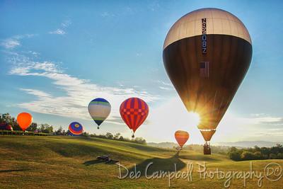 2016 Muscadine Balloon Fiesta