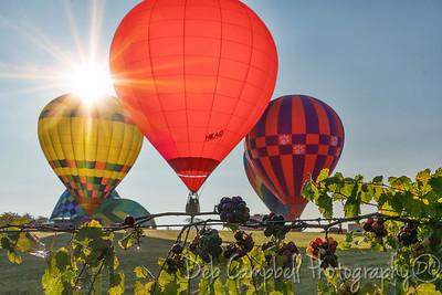 2017 Muscadine Balloon Fiesta