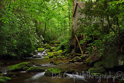 Reagan Tub Mill Rosebay Rhododendron Cascade Roaring Fork Motor Nature Trail Great Smoky Mountains National Park
