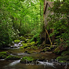 Reagan Tub Mill<br /> Rosebay Rhododendron Cascade<br /> Roaring Fork Motor Nature Trail<br /> Great Smoky Mountains National Park