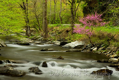 Springtime along Little River Road Great Smoky Mountains