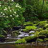 Rosebay Rhododendron Cascade<br /> Roaring Fork Motor Nature Trail<br /> Great Smoky Mountains National Park