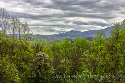 Spring greens in the Smokies