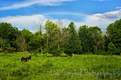 Rainbow at the Pasture