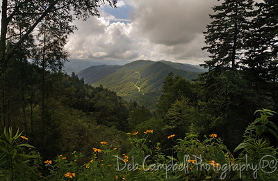 View from Newfound Gap Great Smoky Mountains