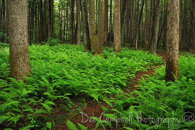 A walk in the woods Roaring Fork Motor Nature Trail Great Smoky Mountains National Park