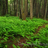A walk in the woods<br /> Roaring Fork Motor Nature Trail<br /> Great Smoky Mountains National Park