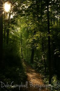 Sunlit Path Ijams Nature Center Knoxville, Tn