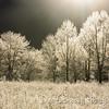 Frosted Illumination