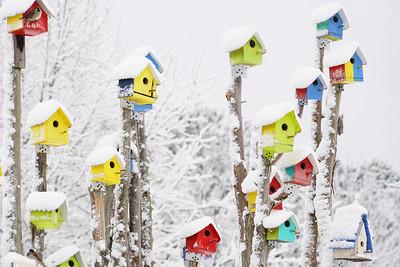Snowy Birdhouses