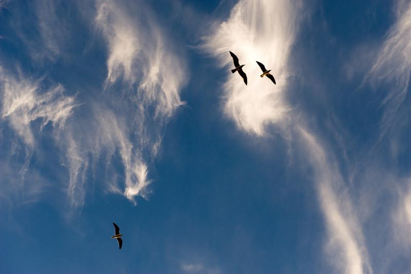Birds with clouds, Lanzarote