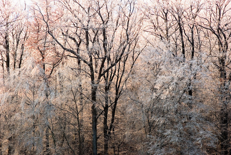 Trees with ice, Germany