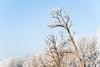20090131_D700_NU_Raureif__59-Bäume mit Raureif