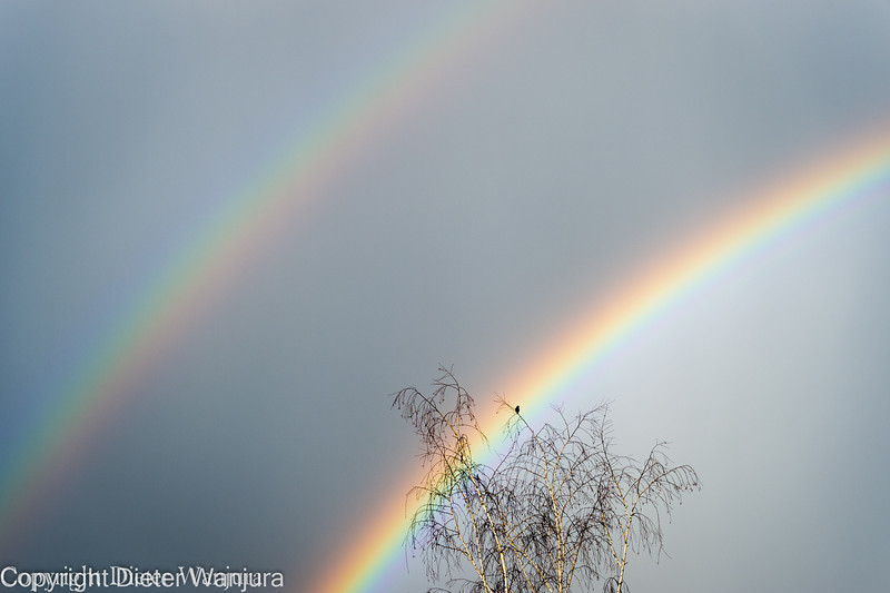 Regenbogen-2