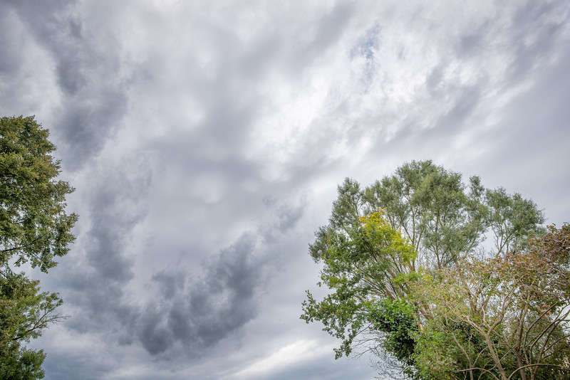 Himmel mit Bäumen