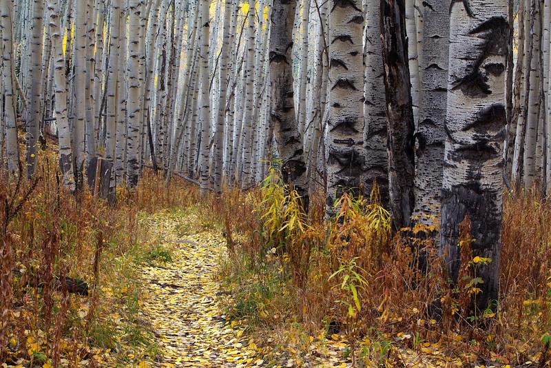 American Lake Trail