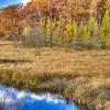 Pickeral Lake Wetland