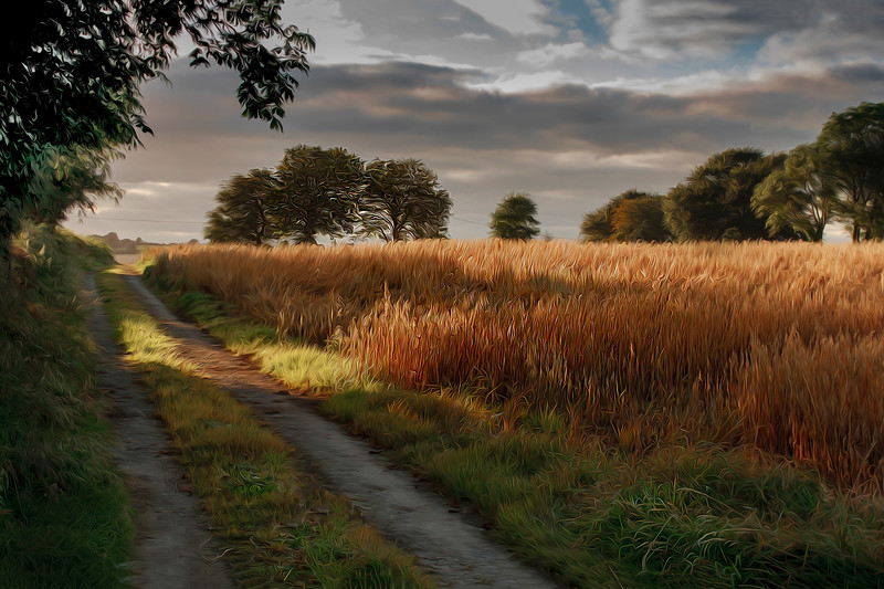 TIPPERARY LANES. AUTUMN 2012<br /> This special edition print , printed on metallic fine art paper comes in a 12 by 18 inch framed print. Individually signed and numbered by the photographer. Contact me for details .