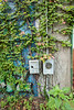Ivy, (detail from doorway), 8-31-2013