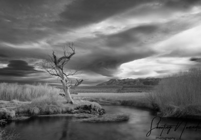Owens River, Bishop CA