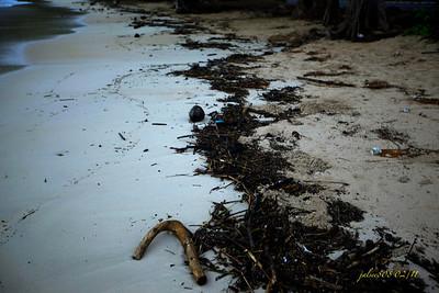 BeachDebris022411