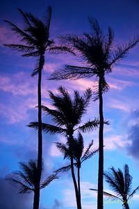 Palms042611