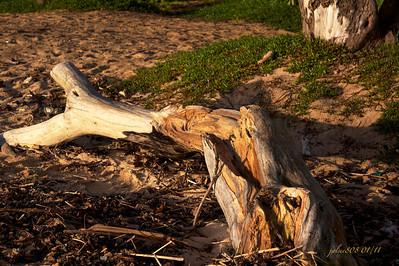 Driftwood010911