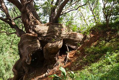 Treestump070911-1