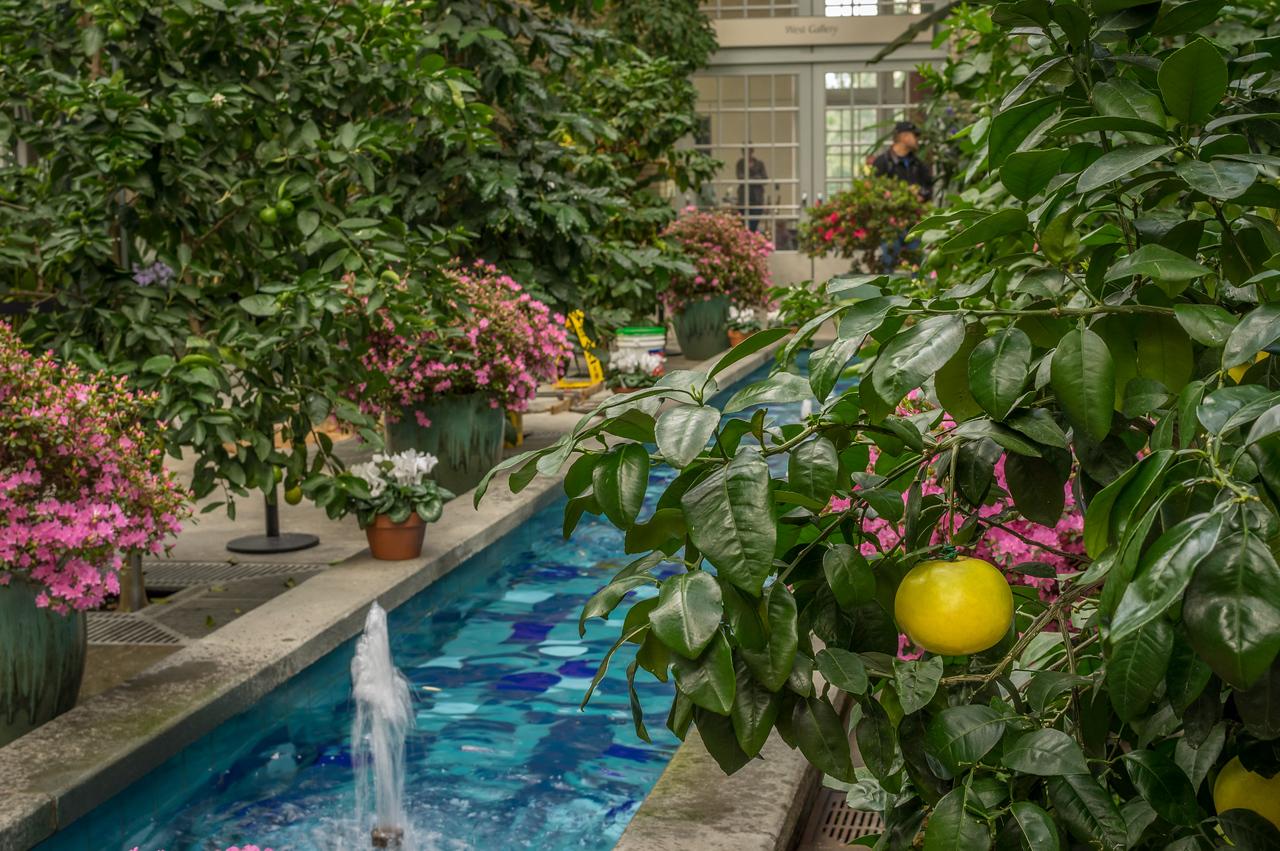 Botanical Gardens, Washington, DC