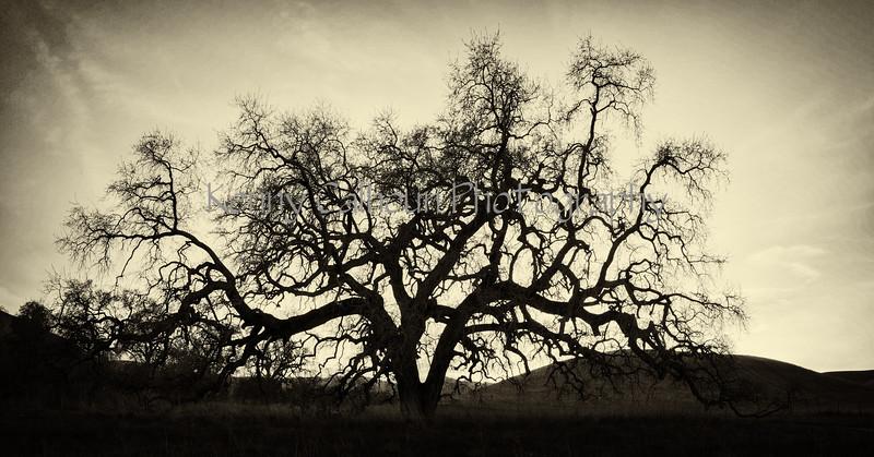Bruce's Oak Sunset 2-17-20--4