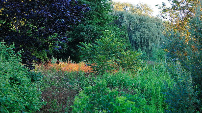 Landscape of a variety of trees, plants, shape and colors during sunset time