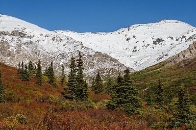 Alpine Beauty Savage Alpine Trail, Denali National Park Alaska © 2014